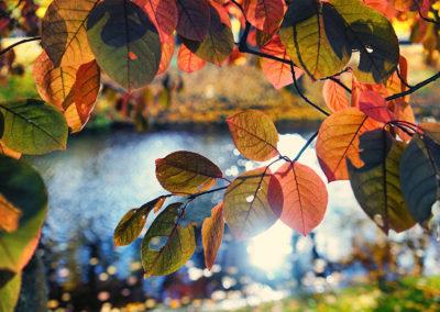 fall_800