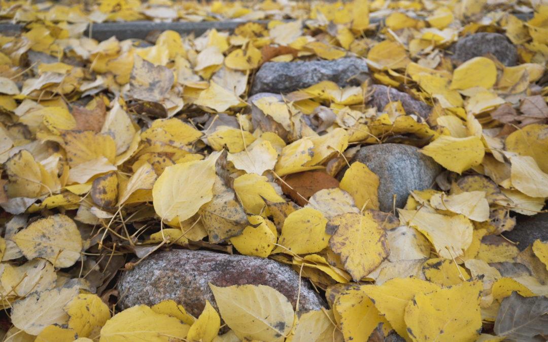 Autumn. Video